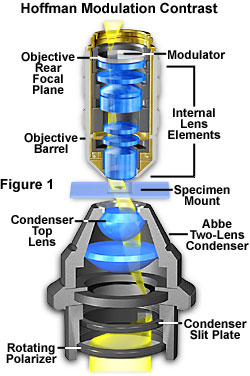 显微观察术――霍夫曼相衬原理
