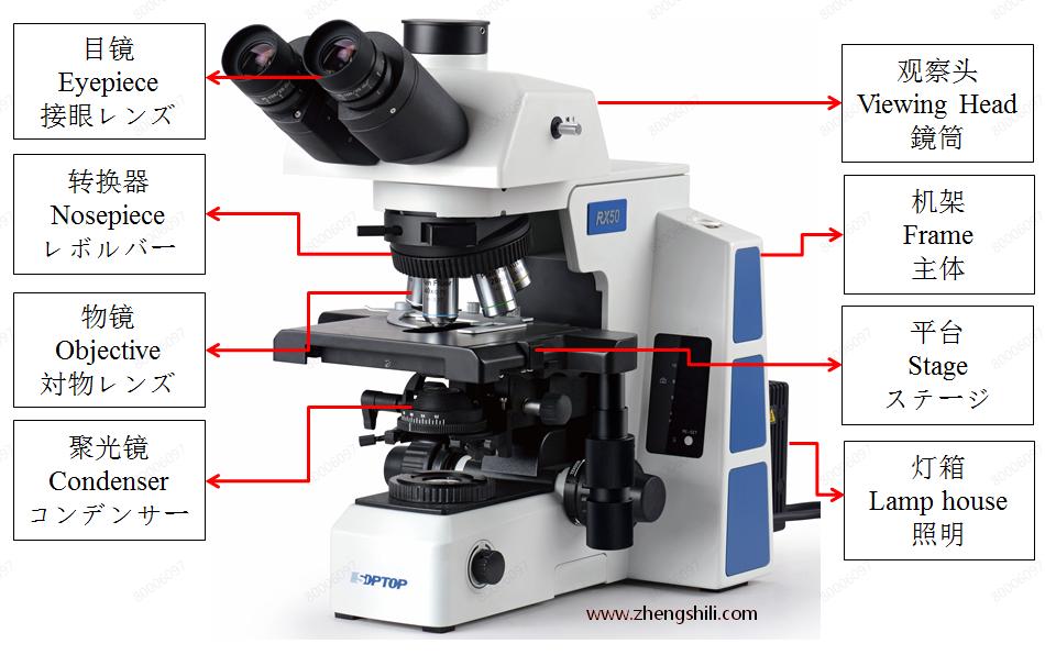 显微镜相关 中英日对照描述