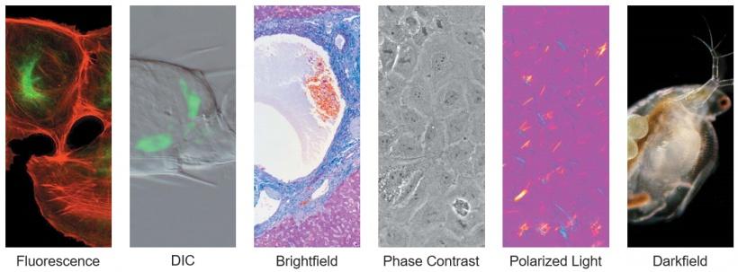 如何选择合适的显微镜物镜