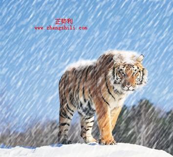 PS制作绚丽下雪场景